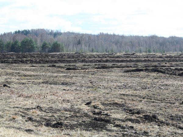Low-moor-peat-bog